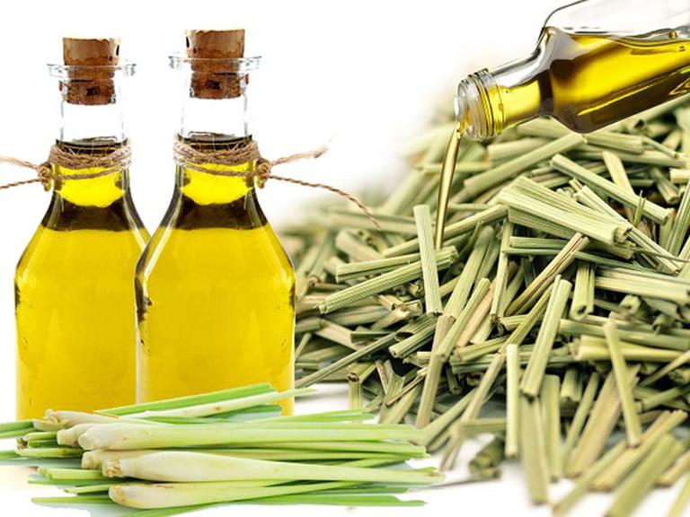 sự khác biệt giữa tinh dầu sả chanh với tinh dầu sả