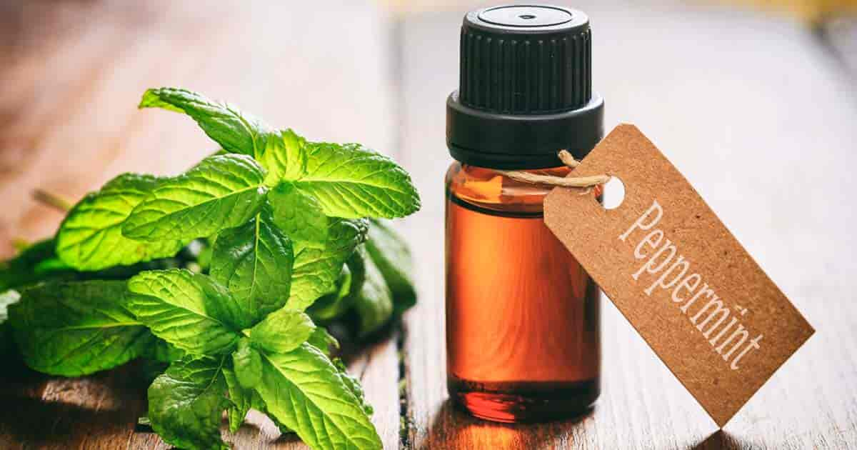 peppermint-oil-hungthinh-oil